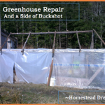 Greenhouse Repair and a Side of Buckshot