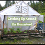 Catching Up Around the Homestead – June