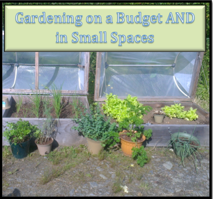 Gardening on a Budget Small Space