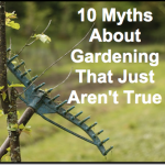 10 Myths About Gardening That Just Aren't True