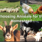Choosing Animals for the Homestead