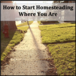 How to Start Homesteading Where You Are