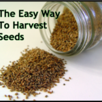 The Easy Way To Harvest Seeds