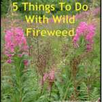 5 Things To Do With Wild Fireweed