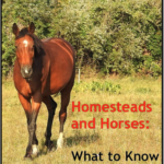 Homesteads and Horses: What to Know